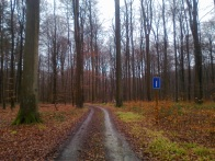 Dead end road sign. In the forest.